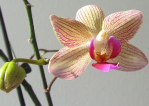 2013-02-10-orchidee.jpg