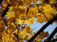 Schnappschuss in die Herbstblätter
