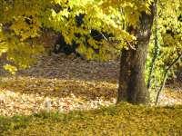 Laub unter einem Baum